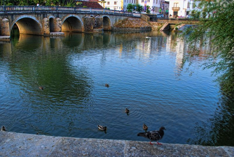 Animals at Nabão River in Tomar, Portugal
