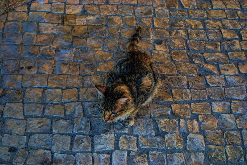 Cat in Tomar, Portugal