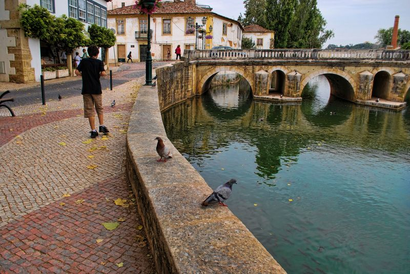 Pigeons near Nabão River in the City of Tomar in Portugal