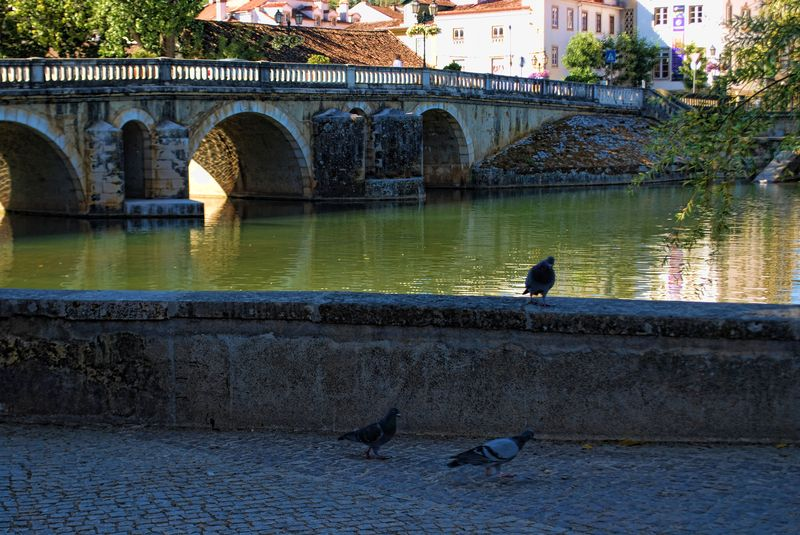 Pigeons near the Old Bridge in the City of Tomar, Portugal