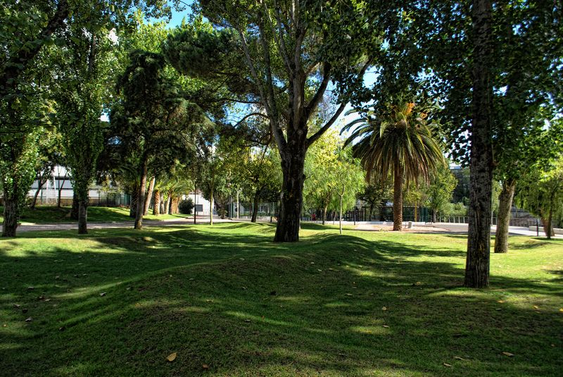 Grass waves and trees at Mouchão Park in the City of Tomar