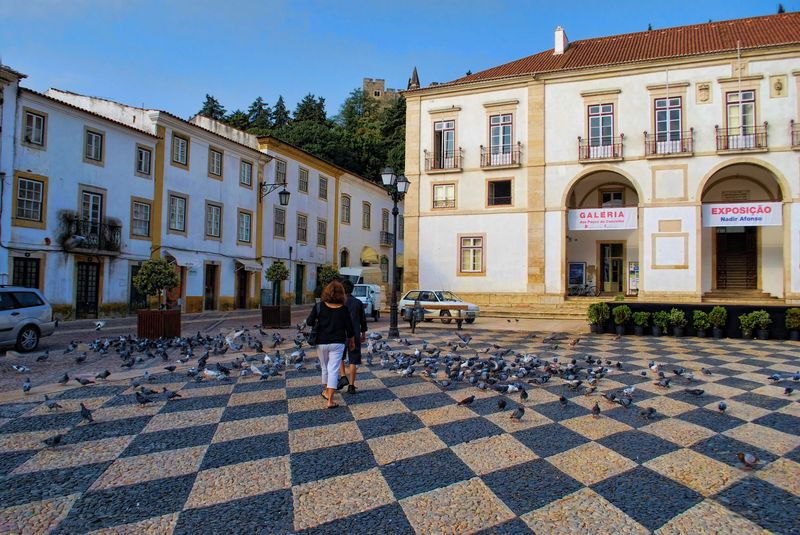 Hundreds of pigeons at Praça da República in the City of Tomar