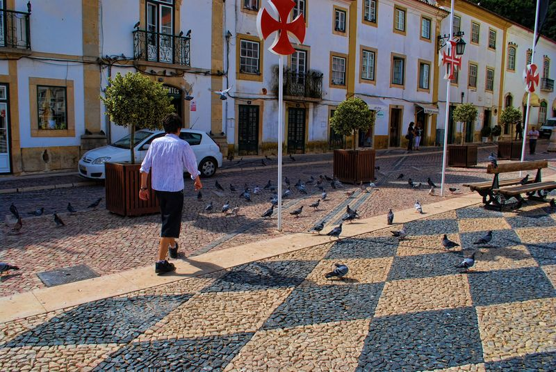 Pigeons at Praça da República in the City of Tomar in Portugal