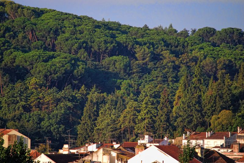 Forest and rooftops in Tomar, Portugal