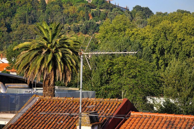 TV antennas, rooftops and a forest in the City of Tomar