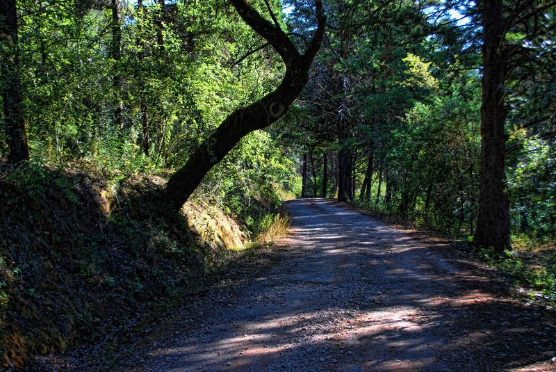 Road around the Seven Hills Forest in the City of Tomar