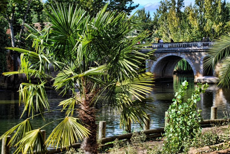 Green area with palm trees in the banks of Nabão River, near the Old Bridge in Tomar