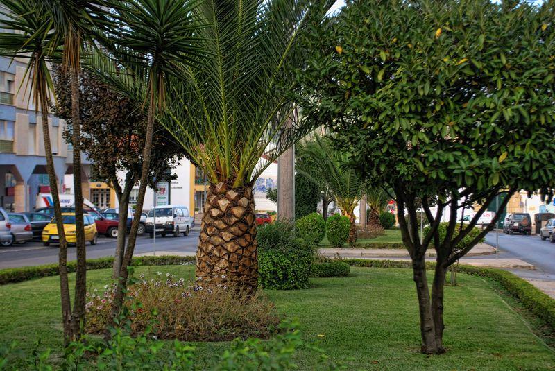 Urban Garden at Alameda Primeiro de Março in the City of Tomar in Portugal