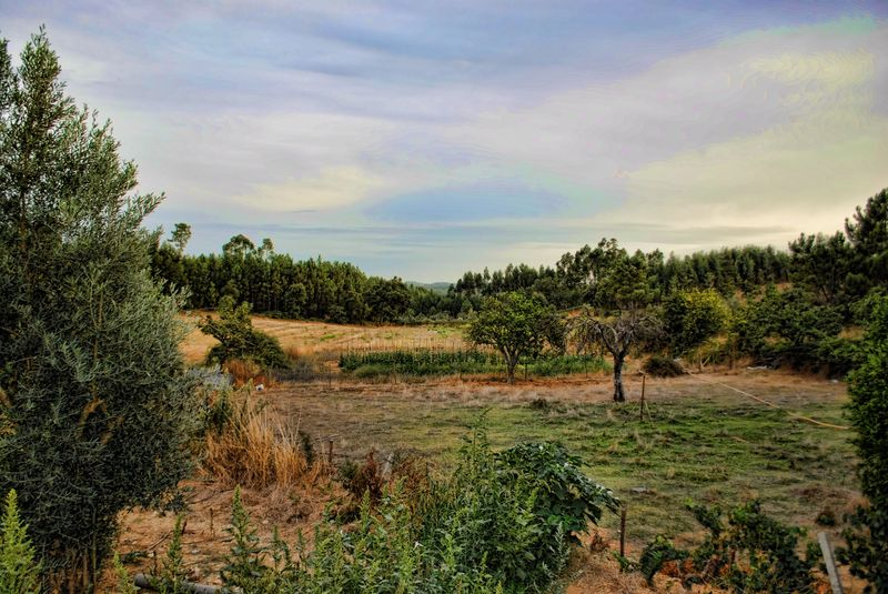 Lameiras farm in Tomar and its produce fields