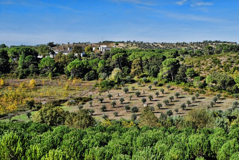 olive trees in the distance at peges rural area in the city of tomar